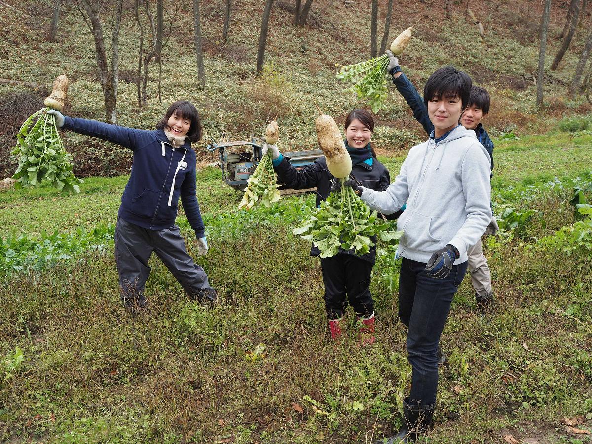 過疎地の農業を支援する援農ボランティア