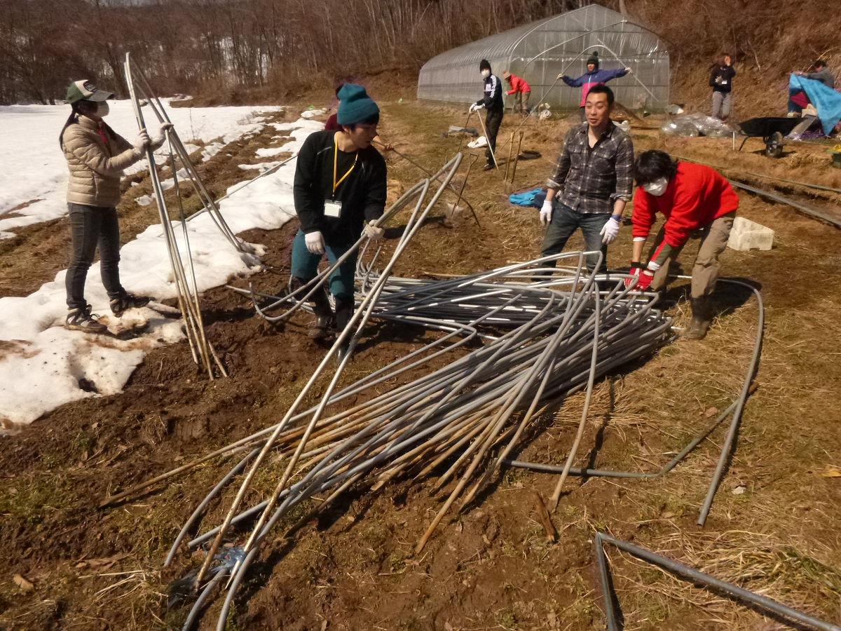 冬の大雪で潰れてしまったビニールハウスの解体作業を補助するボランティア