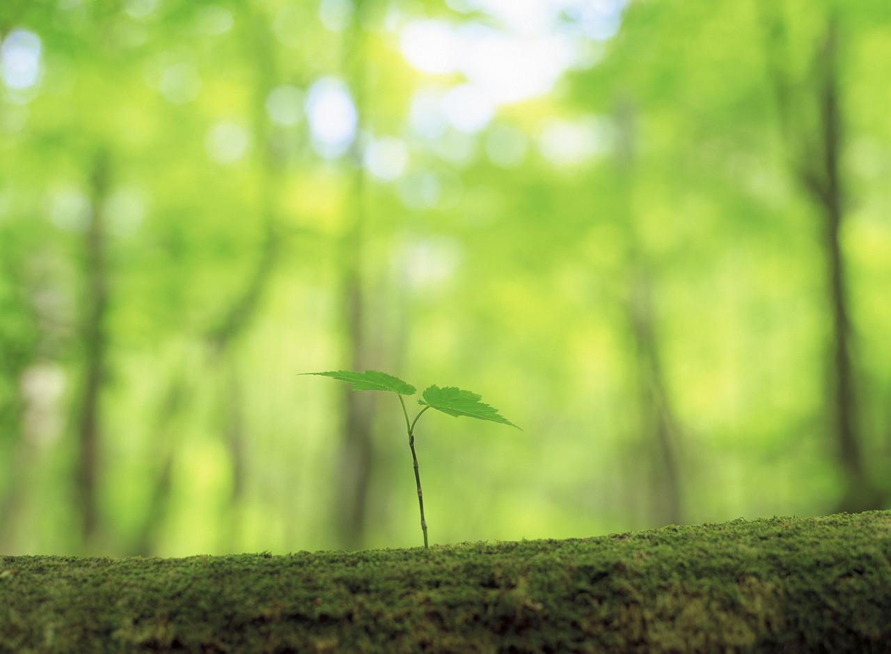 森に生えた新たな芽